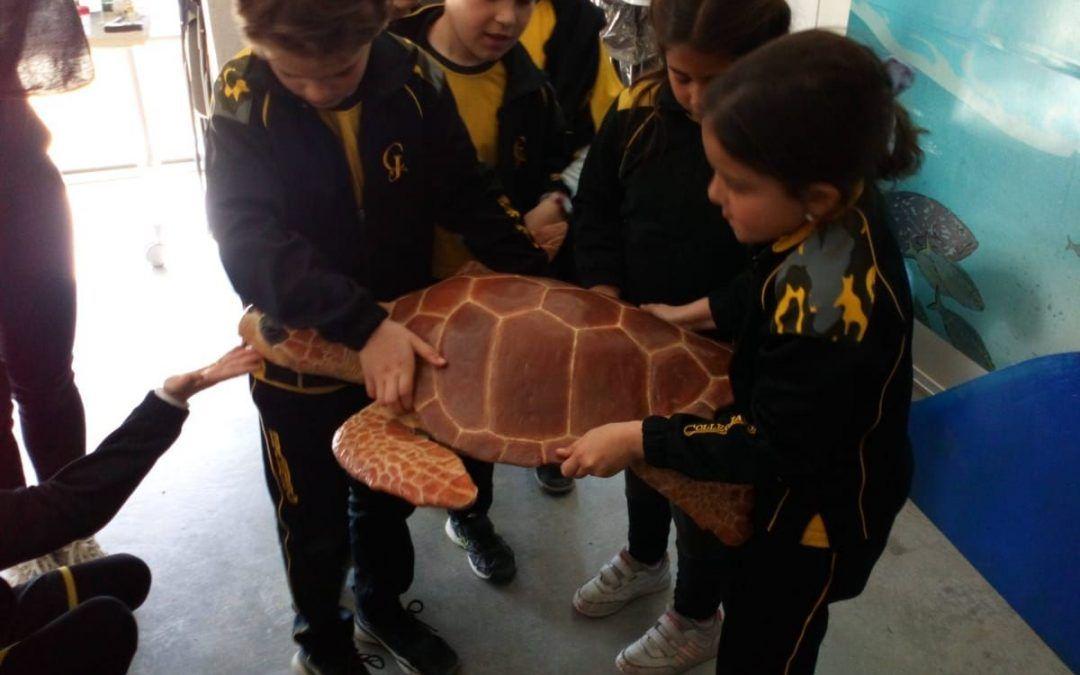 Protegit: 2n de primària visita la Fundació CRAM, Centre de Recuperació d'Animals Marins. El Prat de Llobregat.