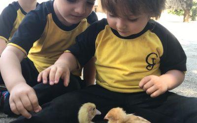 Els nens i nenes de P3 es converteixen en grangers a Can Montcau, La Roca del Vallès.